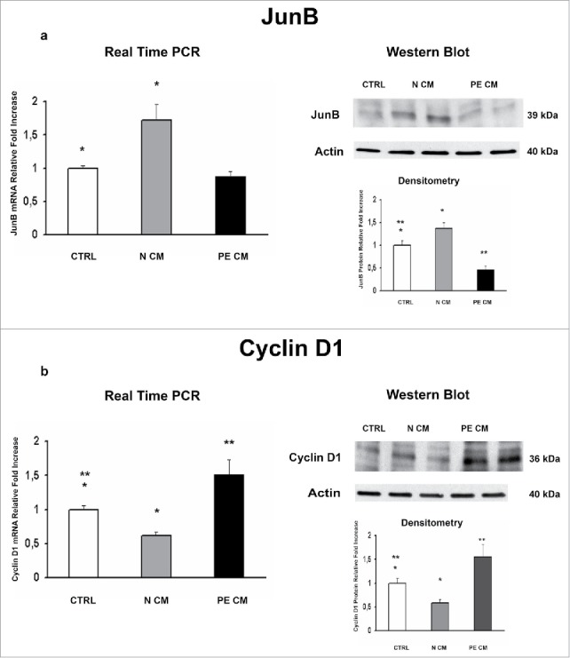 JunB and Cyclin D1 gene and protein expression levels in physiological placental villous explants treated with culture media conditioned by normal or PE-PDMSC. (A)JunB mRNA (left panels) and protein (right panels) expression levels in physiological villous explants treated with unconditioned media (CTRL, n = 16 explants) or media conditioned by normal (N CM, n = 16 explants) and preeclamptic (PE CM, n = 16 explants) PDMSCs as assessed by Real Time PCR and Western Blot analysis. B) Cyclin D1 mRNA (left panels) and protein (right panels) expression levels in physiological villous explants treated with unconditioned media (CTRL, n = 16 explants) or media conditioned by normal (N CM, n = 16 explants) and preeclamptic (PE CM, n = 16 explants) PDMSCs as assessed by Real Time PCR and Western Blot analysis. Statistical significance (*) has been considered as p