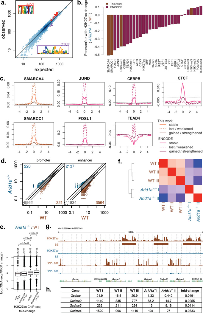 ARID1A loss impairs enhancer-mediated gene regulation in the colonic epithelium a) Observed vs. expected TF motif instances at TSS-distal H3K27ac regions (enhancers) with reduced H3K27ac signal based on enrichment regions with stable H3K27ac signal. Motifs highly similar to AP1 and CTCF motifs are highlighted; b) Correlation between H3K27ac signal change ( Arid1a −/− / WT) and WT ChIP-Seq signal levels of different factors profiled in this work and by the ENCODE Project. c) ChIP-Seq profiles for <t>SMARCA4,</t> SMARCC1, JUND, FOSL1, and CTCF in WT HCT116 cells centered around TSS-distal H3K27ac regions (enhancers) that remain stable, show lost/weakened H3K27ac, or show gained/strengthened H3K27ac in Arid1a −/− cells relative to WT; d) H3K27ac levels at TSS-proximal (promoter) and TSS-distal (enhancer) enrichment regions for colon epithelium from wildtype (WT) and Villin-Cre ER-T2 Arid1a fl/fl ( Arid1a −/− ) mice (Note: numbers in the three corners denote numbers of activated ( > 2×), inactivated (