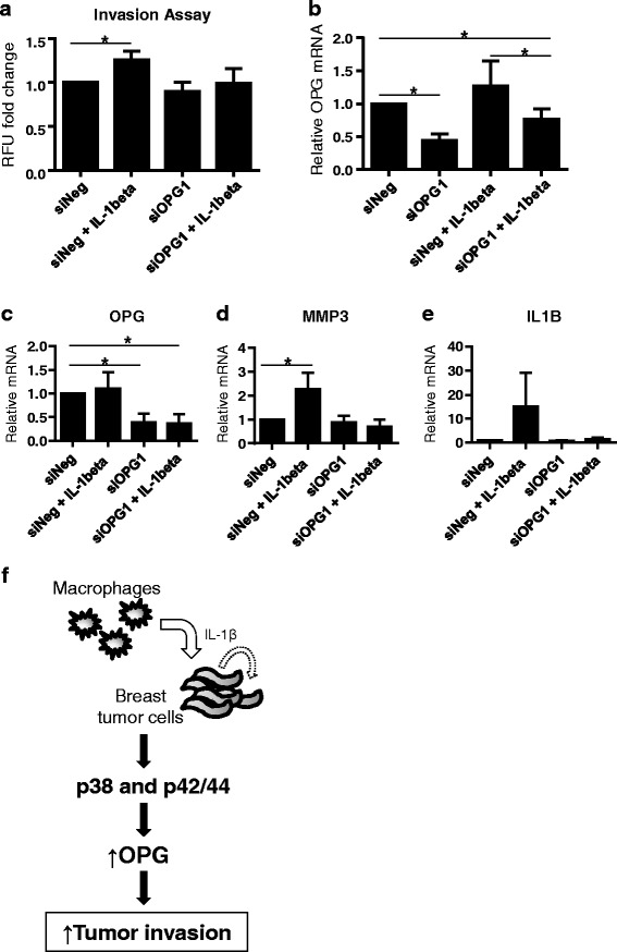 IL1B promotes the invasion of breast cancer cells in an OPG-dependent manner. MDA-MB-436 breast cancer cells transfected with OPG (siOPG1) or negative control (siNeg) siRNA were pretreated with IL1B (10 ng/mL), and subsequently assayed for invasiveness. a IL1B-mediated cell invasion is reduced in OPG knockdown cells, ( n = 3). Data is represented as relative fluorescence units (RFU) fold change relative to the untreated negative control. b OPG knockdown in the breast cancer cells used in the cell invasion assay was assessed at the end point of the experiment. Knockdown was verified by qRT-PCR. MDA-MB-436 cells transfected with OPG or control siRNA were treated with IL1B or PBS (10 ng/mL) for 72 h. c OPG knockdown at 72 h was verified by qRT-PCR. Assessment of d MMP3 and e IL1B mRNA levels indicate the IL1B-mediated induction is inhibited by OPG depletion, ( n = 3). Data are represented by mean ± SD. Asterisks indicate statistical significance ( p