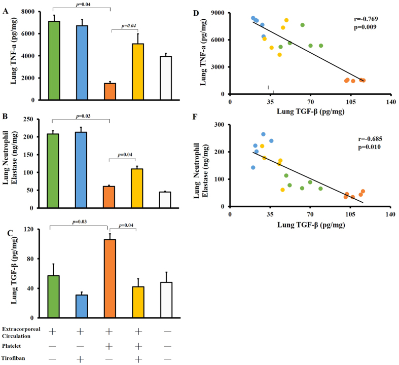 Platelet transfusion attenuates ECC-induced pulmonary inflammation. Mice were subjected to ECC for 30 min, treated as described in the legend to Fig. 2 , and then the right lung was harvested 1 h later, homogenized, and centrifuged. Samples were assayed for TNF-α ( A ), neutrophil elastase ( B ), and TGF-β ( C ) using commercial ELISA kits. Levels of TGF-β correlated negatively with TNF-α ( D ) and with neutrophil elastase ( E ). Data shown are mean ± SEM.