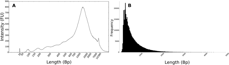 ( A ) Length profile (bp) of concatenated amplicons as measured with an Agilent High-Sensitivity DNA chip; internal marker at 35 bp and 10380 bp. ( B ) Read length (bp) histogram of the high quality two-directional (2D) nanopore reads.