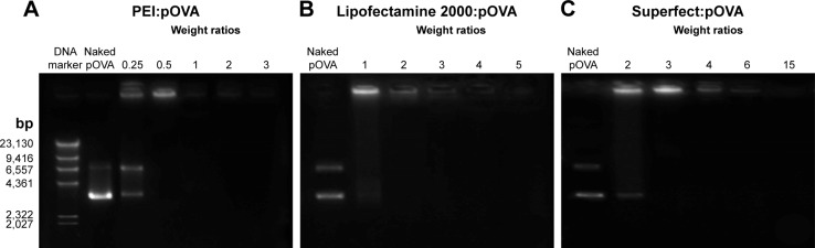 Gel retardation of ( A ) PEI:pOVA complexes, ( B ) Lipofectamine 2000:pOVA complexes, and ( C ) Superfect:pOVA complexes to confirm the positive charges of the complexes at different weight ratios. Abbreviations: PEI, polyethylenimine; pOVA, plasmid DNA encoding ovalbumin.