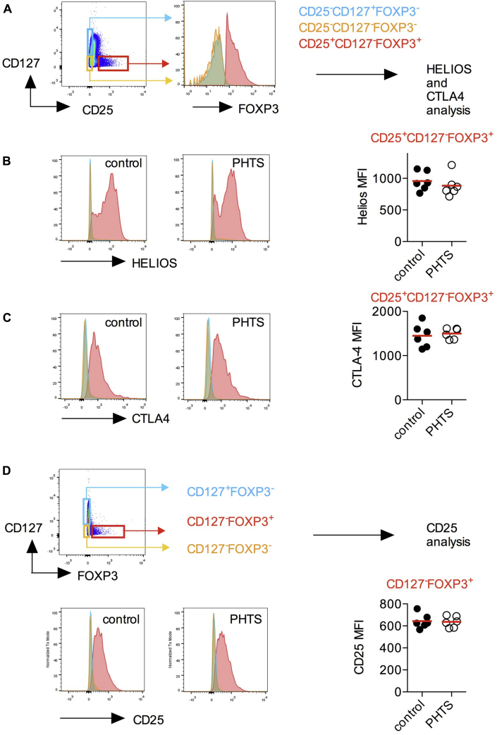 Phenotype of Treg cells in patients with PHTS. A, CD3 + CD4 + FOXP3 + CD25 + CD127 − cells (Treg cells) were compared with FOXP3 − CD25 − CD127 + (naive and central Tmem cells) and FOXP3 − CD25 − CD127 − cells (effector T cells). B, Expression levels of Helios are shown as a histogram and quantified in Treg cells. C, Expression levels of CTLA-4 are shown as a histogram and quantified in Treg cells. D, CD3 + CD4 + FOXP3 + CD127 − (Treg) cells were compared with FOXP3 − CD127 + (naive and central Tmem) and FOXP3 − CD127 − (effector T cells) cells. CD25 expression in CD4 + FOXP3 + Treg cells is shown as a histogram and quantified in Treg cells. No statistical differences were detected by using the Mann-Whitney U test.