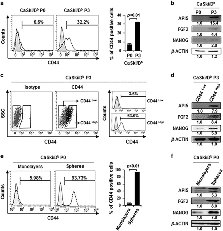 API5 expression is increased in cancer stem-like cell-enriched populations. ( a ) Flow cytometry analysis of CD44 expression in CaSki/D b P0 and P3 cells. The bar graph depicts the percentage of CD44 (mean±s.d.). ( b ) Western blot analysis of expression of API5, FGF2 and NANOG in CaSki/D b P0 and P3 cells. ( c ) CD44 high or CD44 low cells were sorted from CaSki/D b P3 cells by using <t>FACSAria</t> <t>III</t> flow cytometer (left panel). Flow cytometry analysis of CD44 expression in CD44 high or CD44 low cells (right panel). ( d ) Western blot analysis of expression of API5, FGF2 and NANOG in CD44 high or CD44 low cells. ( e ) Flow cytometry analysis of CD44 in CaSki cells grown in monolayer cultures (monolayers) and spheres isolated from CaSki cells under suspension conditions (spheres). The bar graph depicts the percentage of CD44 (mean±s.d.). ( f ) Western blot analysis of expression of API5, FGF2 and NANOG in spheres and monolayers of CaSki cells. ( b , d , f ) Numbers below blots indicate the expression as measured by fold change.