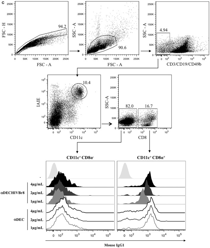 The chimeric αDECHIVBr8 was successfully produced and retained its ability to bind to cells expressing the DEC205 receptors . (A) One microgram of each monoclonal antibody (mAb) was run on 12% SDS-PAGE under reducing conditions. An immunoblot was performed using peroxidase-labeled goat anti-mouse IgG Fc specific and peroxidase-labeled goat anti-mouse IgG kappa. Molecular weight (kilodaltons), αDEC (control), and αDECHIVBr8; (B) CHO cells expressing either DEC205 (left) or DCIR2 (right) receptors were incubated with 4, 2, or 1 µg/mL of αDEC (control) or αDECHIVBr8, following staining with anti-mouse IgG1 PE antibody. Fifty thousand events were acquired in FACS Canto II and analysis was performed using FlowJo software; (C) 5 million splenocytes from BALB/c mice were incubated with 4, 2, or 1 µg/mL of the chimeric αDECHIVBr8 or αDEC mAbs. Splenocytes were then incubated with a pool of fluorescent antibodies and gated as singlets and CD3 − CD19 − CD49b − . Dendritic cells were selected as CD11c + IAIE + and subsequently divided into CD8α + and CD8α − . Binding was detected on 3 × 10 6 cells using an anti-mouse IgG1-PE antibody. Analysis was performed using FlowJo software.