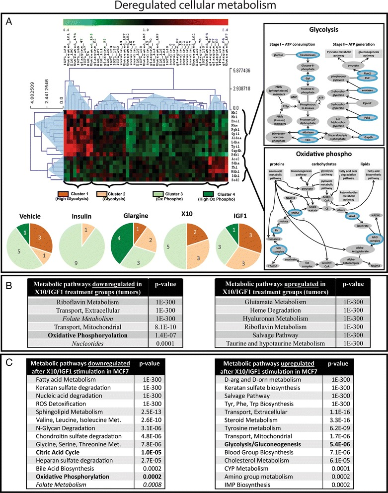 Warburg effect in mammary gland tumor tissue of chronically insulin analogue treated mice. a Hierarchical clustering (Pearson correlation) of genes involved in glycolysis or oxidative phosphorylation per MG tumor. The pie diagrams show the distribution of the different clusters per treatment group. b Table with the metabolic pathways that were significantly down- or upregulated in the X10/IGF1 treatment groups compared to the vehicle, insulin, and glargine treatment groups. c Table with the metabolic pathways that were significantly down- or upregulated after X10/IGF1 exposure compared to vehicle, insulin, and glargine treatment in the MCF7 IGF1R model