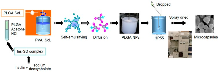 Diagram of the preparation of multifunctional composite microcapsules. Ins-SD complex, insulin-sodium <t>deoxycholate</t> complex; PVA, polyvinyl alcohol; PLGA, poly(lactide- co -glycolide); NPs, nanoparticles, HP55, hydroxypropyl methyl cellulose phthalate.