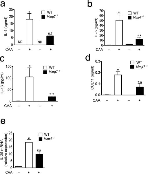 Attenuated T H 2 cytokines and chemokines in Mmp7 −/− mice Mmp7 −/− mice and age and sex matched wild-type (n=5 per group) mice immunized as described in Fig. 2 and 24 h after the last immunization, concentrations of (a) IL-4, (b) IL-5 and (c) IL-13 were measured in BAL fluid using Luminex. (d) Level of CCL11 in BAL fluid was measured by ELISA. (e) Expression of Il-25 mRNA in the lung of WT and Mmp7 −/− CAA immunized mice was measured by real time RT-PCR. Data was normalized to actin. (Data represent mean values ± SD; representative of 3 independent experiments). * P