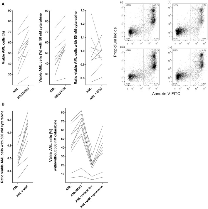 Effects of mesenchymal stem cells (MSCs) on primary human acute myeloid leukemia (AML) cells treated with cytarabine; (A) effect of 50 nM cytarabine-exposure on AML cell viability in transwell cocultures and (B) effect of 500 nM cytarabine tested in direct-contact cocultures . Primary AML cells derived from the same 10 patients were included in all these studies, and MSC24539 was used in all experiments. The AML cell viability was analyzed by flow cytometry. [ (A) , transwell cocultures] For each patient, we compared cultures containing AML cells alone (AML) or AML cells plus MSCs (AML + MSC). The three figures from left to the middle right show (i) AML cell viability for cells cultured in medium alone with or without MSCs; (ii) AML cell viability in the presence of 50 nM cytarabine for leukemic cells cultured with and without MSCs; and (iii) a comparison of the medium culture ratio (i.e., viable cells in cytarabine-containing cultures versus drug-free controls; medium alone) and MSC culture ratio (i.e., viable cells in cytarabine-containing cultures versus drug-free controls; MSCs being added to both cultures). The results for the five patients (solid lines) for which 50 nM cytarabine exhibited a proapoptotic effect in the presence of MSCs are indicated. The results for one responding patient are presented in detail (right part of the figure; i/ii: drug-free control, iii/iv: 50 nM cytarabine without and with MSCs, respectively); the percentage of viable cells (population at the lower left) is indicated in the figures for each of the four cultures. [ (B) , direct-contact cultures] The left part of the figure compares the medium culture ratio (i.e., viable cells in cytarabine-containing cultures versus drug-free controls; medium alone) and MSC culture ratio (i.e., viable cells in cytarabine-containing cultures versus drug-free controls; MSCs being added to both cultures) when testing 500 nM cytarabine. The right part of the figure shows the percentage of viable prima