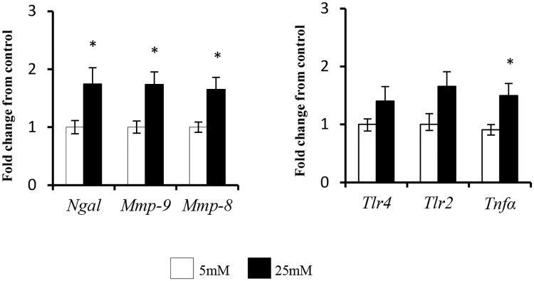 The effect of incubation in high glucose concentration (25mM) on neutrophil (A) NGAL, MMP-9 and MMP-8 mRNA and (B) TLR4, TLR2 and TNFα mRNA. Results are expressed as Mean ± SEM. * P