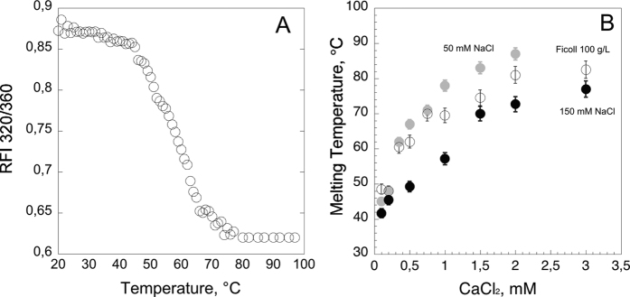 Thermal stability of hCyaAm followed by tryptophan fluorescence. Panel (A) Temperature-induced unfolding of hCyaAm at 50 nM followed by intrinsic fluorescence of tryptophan using the ratio of fluorescence emission intensities at 320 nm and 360 nm (rFI 320/360) as described in Materials and Methods. Panel (B) Effect of ionic strength and the presence of the molecular crowding agent Ficoll 100 g/L on the stability of hCyaAm as a function of calcium concentration ( i.e. , 0, 0.2, 0.5, 1, 2 and 3 mM calcium); hCyaAm in 20 mM Hepes, 50 mM NaCl (grey circles ), hCyaAm in 20 mM Hepes, 150 mM NaCl (buffer A, black circles ⦁) and hCyaAm in 20 mM Hepes, 150 mM NaCl, Ficoll 100 g/L (open circles ⚪). Buffer A contains 20 mM Hepes, 150 mM NaCl, pH 7.4. Error bars: S.D. Three independent preparations of hCyaAm were used for this experiment.
