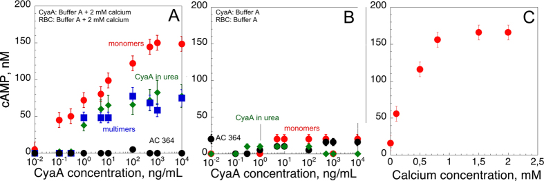 Intoxication activity of the different CyaA species. The protein samples, i.e. , hCyaAm (red circles), U-CyaA, (green diamonds), M-CyaA, (blue squares), AC364 (black circles) were directly diluted into erythrocyte suspensions to reach the final concentrations. CyaA in 6 M urea was buffer exchanged on a G25 equilibrated with buffer A +2 mM CaCl 2 , providing the U-CyaA sample. Panel (A) Erythrocytes were washed and resuspended in buffer A complemented with 2 mM calcium. Panel (B) All protein samples were buffer exchanged on a G25 equilibrated with buffer A to remove calcium. Erythrocytes where washed and resuspended in buffer A. Panel (C) cAMP accumulation in erythrocytes as a function of calcium concentration. Erythrocytes were extensively washed in buffer A and then supplemented with the indicated concentrations of calcium ( i.e. , 0, 0.2, 0.5, 0,8, 1.5 and 2 mM CaCl 2 ). Monomeric hCyaAm was desalted on G25 equilibrated in buffer A and diluted into the erythrocyte suspensions at a protein concentration of 2.8 nM, i.e. , 500 ng/mL. Buffer A contains 20 mM Hepes, 150 mM NaCl, pH 7.4. Standard deviation values: ±12 nM cAMP. Three independent preparations of CyaA were used for this experiment.