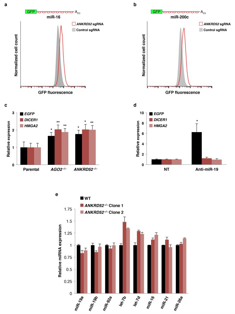 General impairment of miRNA-mediated silencing in ANKRD52 −/− cells a, b, Flow cytometry analysis of EGFP expression in HCT116 cells stably expressing reporters for miR-16 ( a ) or miR-200 ( b ) after transduction with lentiCRISPR vectors targeting ANKRD52 or expressing a non-targeting sgRNA. c, qRT-PCR showing de-repression of established let-7 targets ( DICER1 or HMGA2 ) in AGO2 −/− or ANKRD52 −/− cells. *p