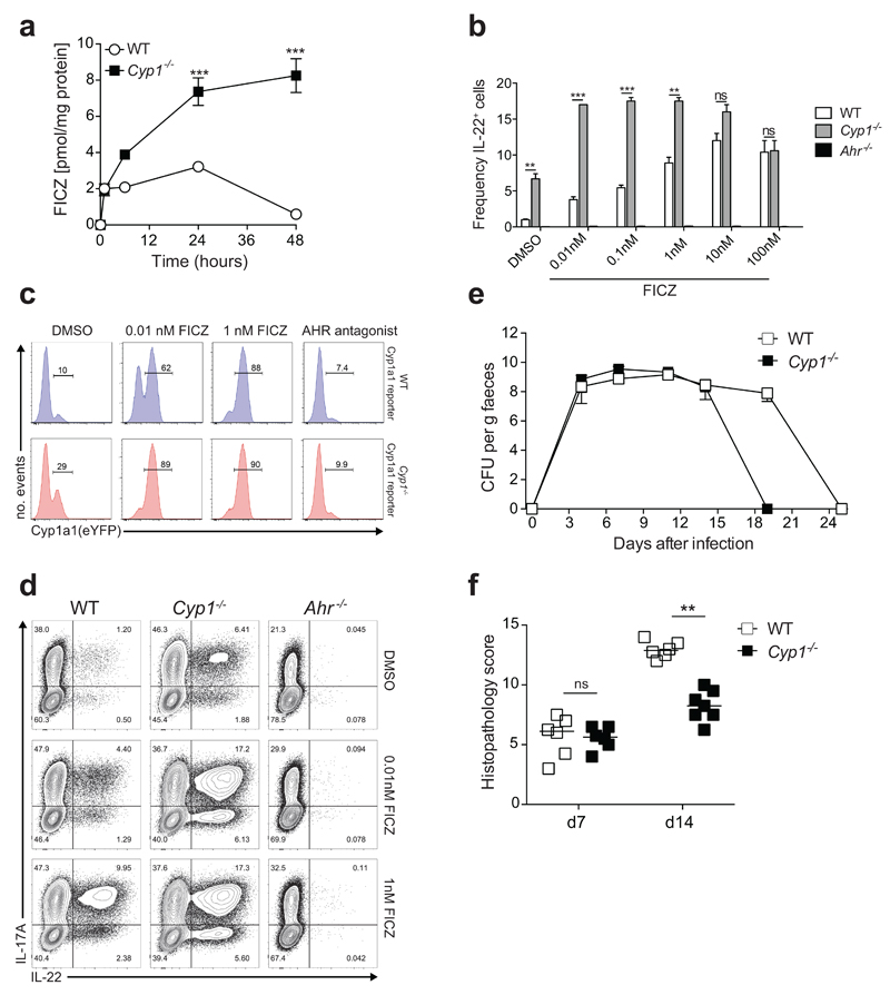 Effects of Rag1-Cre mediated Cyp1a1 expression on immunity to C. rodentium . Mice of indicated genotypes were infected orally with ~2x10 9 C. rodentium and killed 14 days after infection or monitored for survival. a , Survival plot. b , C. rodentium burdens in the colon, cecum, liver and spleen. Bars are the median and each symbol represents an individual mouse. c , Pathology scores of distal colon and cecum. Bars are the mean and each symbol represents an individual mouse. d , Absolute numbers of cytokine-producing TCRβ + CD4 + T cells in the colon of C. rodentium infected mice. Results are representative of two independent experiments ( n =5 per group). NS = not significant, ** P