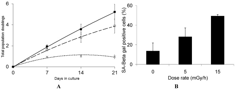 Panel ( A ): Growth rate kinetics of human fibroblast deficient in GS in response to chronic dose of 5 (□) and 15 (×) mGy/h γ-rays as well as for non-exposed cells (■). The results are based on 3 independent experiments ( n = 3) for each dose rate; Panel ( B ): The quantification of SA-βgal staining in GS deficient fibroblast after 3 weeks of chronic exposure to γ-rays are based on 3 independent experiments ( n = 3). The exposed cells were subjected to in situ SA-βgal staining at pH 6 and examined by bright field phase microscopy. The SA-βgal positive cells are presented as % of total number of the investigated cells.