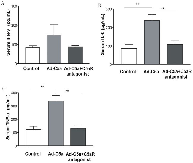 Effect of C5a overexpression on inflammatory cytokines expression Serum from blood samples was taken 14 days after Ad-C5a injection. ELISA of the serum level of interferon γ <t>(IFN-γ)</t> A. , interleukin 6 (IL-6) B. and tumor necrosis factor α (TNF-α) C. N = 5 mice per treatment group. Data are means ± SEM. ** P