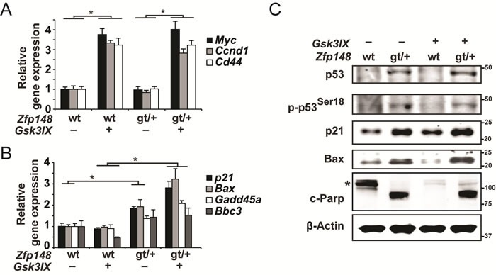 Constitutive activation of β-catenin induces p53-activation and apoptosis in small intestine explants from ApcZfp148 mice A. - B. <t>Taqman</t> <t>RT-PCR</t> assessment of mRNA levels of three β-catenin target genes A. and four p53-target genes B. in small intestine explants that were dissected from Apc and ApcZfp148 mice and treated with 2μM of the GSK3β-inhibitor GSK3IX or DMSO. The explants in A. were treated for 6 hours and those in B. for 20 hours ( n = 6). C. Western blots of phosphorylated and total p53, the p53 targets p21 and Bax, and the apoptosis marker cleaved Parp1 (89-kD fragment) in small intestine explants that were dissected from Apc and ApcZfp148 mice and treated with 2μM GSK3IX or DMSO for 20 hours. Asterisk indicates uncleaved Parp1 (116-kD fragment). β-Actin was used as loading control. Data are represented as mean ± SEM. * P