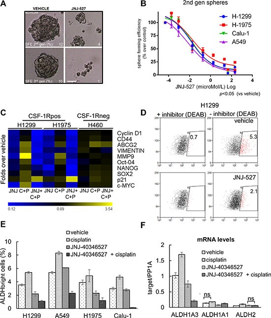 The inhibition of CSF-1R affects some protumorigenic features of lung cancer cells ( A ) CSF-1R inhibition affects the propagation of Sphere Forming Cells in 3D cultures. Representative micrographs of H1299 cultures serially propagated in no serum, no adhesion conditions, in the presence of growth factors. The Sphere Forming Efficiency (SFE) was calculated as the percentage of formed spheres/seeded cells scale bar: 100 micrometers. ( B ) Graph reporting the sphere forming efficiency (SFE) of 4 representative cell lines treated with increasing doses of JNJ-40346527. Mean ± SE of two independent experiments. ( C ) Inhibition of CSF-1R affects the levels of cancer related mRNAs. Heat map. Quantitative PCR. mRNA levels of the indicated genes from H1299 and H1975 cells (expressing CSF-1R) and from H460 cells (not expressing the receptor), treated with vehicle or JNJ-40346527 for 24 hrs , alone or in combination with cisplatin(CC 50 ). Please note that at 24 hrs of treatment no significant cell death was observed at the time of harvesting (24 hrs) (data not shown). ( D – F ) Inhibition of CSF-1R affects the number of chemoresistant ALDH bright cells. (D) Representative dot plots of H1299 treated for 72 hr with cisplatin in the presence of vehicle or JNJ-40346527 (upper and lower panel, respectively). The high ALDH expressing cells were defined as the cells that displayed greater fluorescence (right panels) compared with a control staining reaction containing the ALDH inhibitor, DEAB (diethylaminobenzaldehyde) (left panels), upon addition of the synthetic ALDH substrate BAAA. (E) Histogram reporting the number of ALDH bright cells from four representative cell lines after the indicated treatments for 96 hrs. Background staining obtained with DEAB-treated cells was subtracted for each sample analyzed. The mean ± SEM of three independent experiments is reported. (F) Quantitative PCR. Levels of mRNA of the indicated ALDH isoforms in H1299 cells treated with JNJ-40346527(CC 50