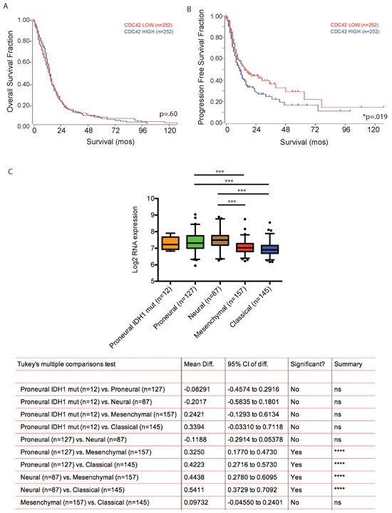 Cdc42 expression level does not predict patient survival with GBM but is associated with poor progression free survival A. Kaplan-Meir Survival curve analysis comparing overall survival of Cdc42 high versus low expressing patients in TCGA dataset. High Cdc42 expression is not associated with overall survival of patients with GBM. ( p = 0.60) B. In contrast, high Cdc42 expression is significantly associated with poor progression free survival ( p