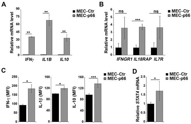 p66Shc alters the expression of several genes linked to the IL-12 pathway in B cells A, B, D. qRT-PCR analysis of IFNγ, IL1B, IL10, IFNGR1, IL18RAP, IL7R and STAT4 mRNA in MEC-1 cells stably transfected with a construct encoding p66Shc (MEC-p66) or empty vector (MEC-Ctr). The relative abundance of gene transcripts was determined on triplicate samples from ≥3 independent mRNA extractions using the ΔΔCt method and is expressed as normalized fold expression (mean±SD). C. Flow cytometric analysis of intracellular IFN-γ, IL-10 and IL-1β in MEC-Ctr and MEC-p66 cells treated for 24 h with a combination of PMA and A23187 in the presence of brefeldin A. Data are expressed as mean fluorescence intensity (MFI) ± SD (n≥3). *** P ≤0.001, ** P ≤0.01, * P ≤0.05.