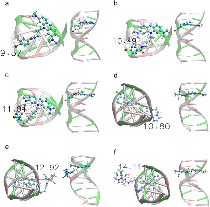 Top view and all structure view of the molecular docking top-ranked poses of the AO derivatives intercalated in the d(ACGTACGT) 2 sequence. ( a ) 125 I-C 3 ; ( b ) 125 I-C 5 ; ( c ) 125 I-C 8 ; ( d ) <t>99m</t> Tc-C 3 ; ( e ) 99m Tc-C 5 and ( f ) 99m Tc-C 8 . Distance between the 125 I or 99m Tc atom relative to the <t>DNA</t> helical axis is displayed in Å.