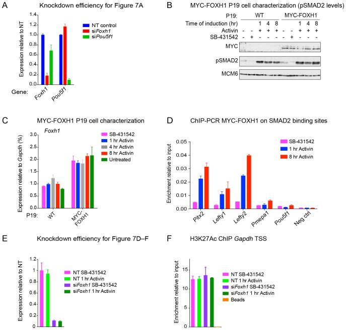 The role of FOXH1 in SMAD2-mediated transcription. ( A ) For experiment shown in Figure 7A , where gene expression following siRNA-mediated knockdown of Foxh1 or Pou5f1 was assessed, qPCR was performed on the untreated samples to determine expression levels of Pou5f1 and Foxh1 itself, as quantified relative to endogenous Gapdh . Means ± SEM of three independent experiments performed in duplicate are shown. NT, non-targeting. ( B ) Lysates were collected from wild type P19 cells or P19 cells stably expressing MYC-tagged FOXH1, treated for the indicated times with either 20 ng/ml Activin and/or 10 µM SB-431542. Shown are Western blots for MYC, pSMAD2 and MCM6 (loading). Note that expression of MYC-FOXH1 does not alter the kinetics of pSMAD2 induction. ( C ) qPCR for Foxh1 was performed on samples collected from either wild type P19 cells or P19 cells stably expressing MYC-tagged FOXH1 as in ( B ), treated as indicated. Shown are expression levels of Foxh1 determined relative to Gapdh . Note that MYC-FOXH1 is expressed at roughly endogenous levels. A representative experiment (means ± SD) is shown. ( D ) ChIP-PCR for MYC-FOXH1 at the indicated SBSs and negative control (Neg ctrl) region using the P19 cells stably expressing MYC-tagged FOXH1 as in ( B ) in the conditions shown. A representative experiment (means ± SD) is shown. ( E ) qPCR for Foxh1 performed on non-targeting (NT) control or Foxh1 siRNA-transfected cells used for the experiments shown in Figure 7D–F to show the efficiency of knockdown. Values were normalized to endogenous Gapdh . A representative experiment (means ± SD) is shown. ( F ) A control H3K27Ac ChIP-PCR on the Gapdh TSS from the samples used in Figure 7E . A representative experiment (means ± SD) is shown. DOI: http://dx.doi.org/10.7554/eLife.22474.024