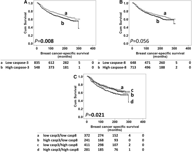 Kaplan–Meier survival curve analysis showing caspase-3 ( panel A ), caspase-8 ( panel B ) and combinatorial caspase-3 and -8 expression ( panel C ), related breast cancer-specific survival; significance was determined using the log rank test. Numbers below the graph show patients at risk at the specified months. Panel A low caspase-3 ( a ) and high caspase-3 ( b ) expression. Panel B low caspase-8 ( a ) and high caspase-8 ( b ) expression. Panel C low caspase-3/-8 ( a ), high caspase-3/low caspase-8 ( b ), low caspase-3/high caspase-8 ( c ), high caspase-3/high caspase-8 ( d )