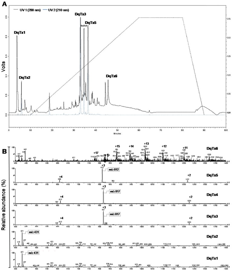 Dinoponera quadriceps crude venom chromatography. ( A ) Chromatographic profile (reverse-phase high performance liquid chromatography—Hitachi system, Phenomenex C18 column 2.6 × 25 cm, 12 µm, 300 Å) of crude Dinoponera quadriceps venom, showing six major fractions monitored at 210 (gray) and 280 (black) nm and eluted using a linear gradient from acetonitrile containing trifluoroacetic acid at 0.1% (TFA) (100% ACN/H 2 O v / v ) for 100 min; ( B ) ESI mass spectrum (LC/ESI-MS—Waters system, mass range between 200 and 2000 m / z , nitrogen gas flow rate of 4.1 L·h −1 , capillary voltage of 2.3 kV, cone voltage of 32 V, extractor voltage of 8 V, source heater set at 100 °C, solvent heater set at 400 °C, ion voltage of 1.0 V, and a multiplier voltage of 800 V) of the fractions of DqTx1 to DqTx6.