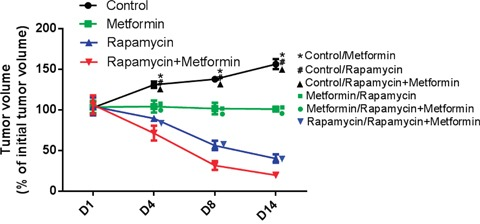 Effects of rapamycin and metformin on tumor growth in vivo rapamycin or metformin alone suppressed tumor growth in vivo . The rapamycin and metformin combination had the most pronounced inhibitory effect compared with monotherapies. *P