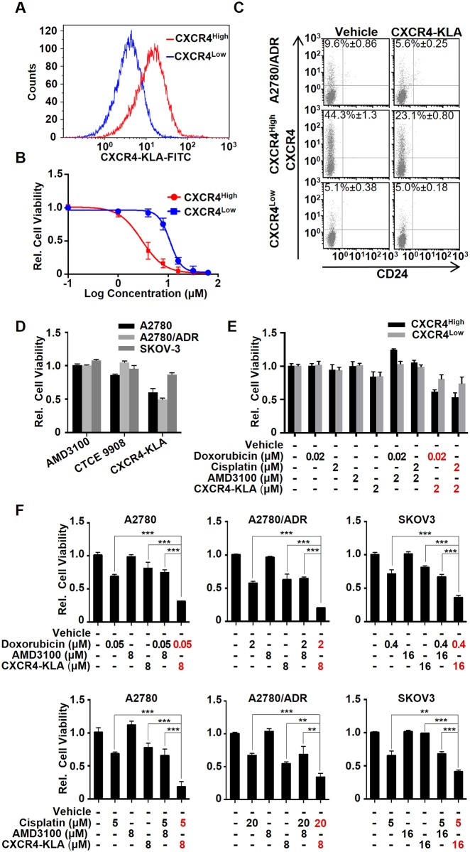 CXCR4 High can be a useful target for OVC treatment. (A) CXCR4-KLA (labeled with FITC) specifically bound to CXCR4 High . Cells were incubated with the peptide (5 μM) in 1.5% (w/v) FBS containing medium for 2h at 37°C prior to performing FACS analysis. (B) CXCR4-KLA displays the preferential cell killing of CXCR4 High compared to CXCR4 Low . MTS assays were performed on the cells 72 h after incubation with different concentrations (0–100 μM) of the peptide. (C) The specificity of CXCR4-KLA was confirmed by a reduction of the CXCR4 High fraction of both CXCR4 High and A2780/ADR after treatment with a suboptimal concentration (2 μM) of CXCR4-KLA for 72 h. (D) CXCR4-KLA is more potent than the conventional CXCR4 antagonists, including AMD3100 and CTCE9908, toward A2780, A2780/ADR, and SKOV3. Cells were incubated with the peptide (10 μM) for 72 h prior to determine the cell viability using MTS assay. (E) Using a combination of drugs (doxorubicin or cisplatin) and CXCR4-KLA (at suboptimal concentrations) showed synergistic cell-killing effects on CXCR4 High and CXCR4 Low (two way ANOVA, *** p