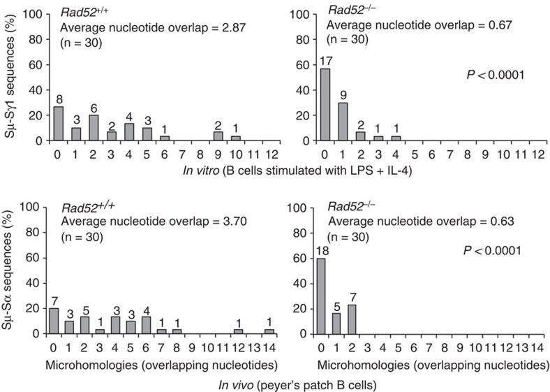 Rad52 deficiency reduces microhomologies at recombination S–S region junctions in vitro and in vivo . Histograms depict percentages of Sμ–Sγ1 junction sequences with indicated numbers of nucleotide overlaps in Rad52 +/+ ( n =30) and Rad52 −/− B cells ( n =30) stimulated with LPS plus IL-4 for 96 h (as in Supplementary Fig. 1 ), and Sμ–Sα junction sequences with indicated numbers of nucleotide overlaps (microhomologies) in Rad52 +/+ ( n =30) and Rad52 −/− B cells ( n =30) from the Peyer's patches of three pairs of Rad52 +/+ and Rad52 −/− C57BL/6 littermates (as in Supplementary Fig. 2 ). 0 indicates no microhomology. The average length of nucleotide overlap and the numbers of sequences analysed ( n ) are indicated. P -values determined using a paired Student's t -test.
