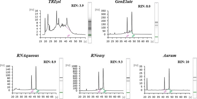 Agilent Bioanlyzer electropherograms. Examples of representative Agilent Bioanlyzer electropherograms of P . lividus RNA: for TRIzol, GenElute and RNAqueous RNA extraction from 5000 embryos extraction; for RNeasy and Aurum RNA extraction from 2500 embryos (see also Table 1 ). Relative Fluorescent Unit (FU) and seconds of migration (s) of RNA samples isolated according to the five different extraction methods are reported. RIN values are also reported.