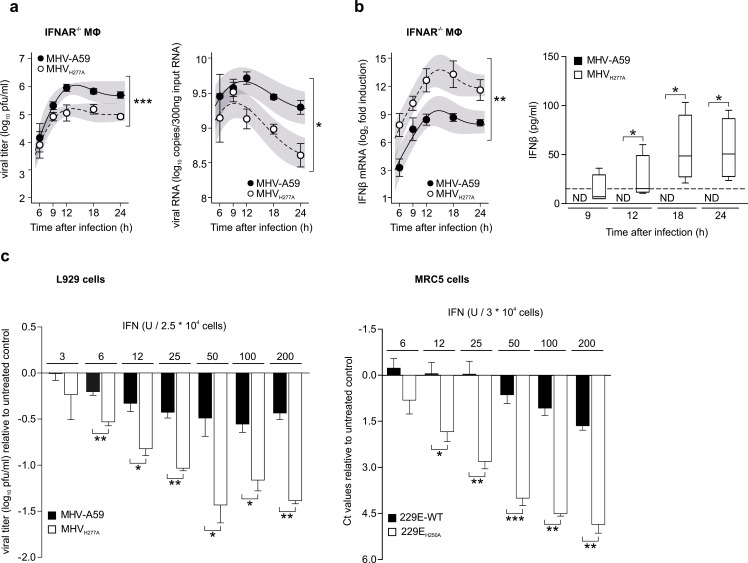 Replication of EndoU-deficient MHV is partially restored in IFNAR -/- macrophages and EndoU mutants display a pronounced sensitivity to IFN-I treatment. ( a ) Replication kinetics of MHV-A59 and MHV H277A (left panel; titers in pfu) and cell-associated viral RNA (right panel; qRT-PCR) following infection of IFNAR -/- bone marrow-derived macrophages (MOI = 1). Data represent four independent experiments, each performed in two to three replicas. Mean and SEM are depicted. The 95% confidence band is highlighted in grey. The differences in peak levels of viral titers (MHV-A59: 6.0, MHV H277A : 5.2) and RNA copies (MHV-A59: 9.7, MHV H277A : 9.3) were statistically significant (p