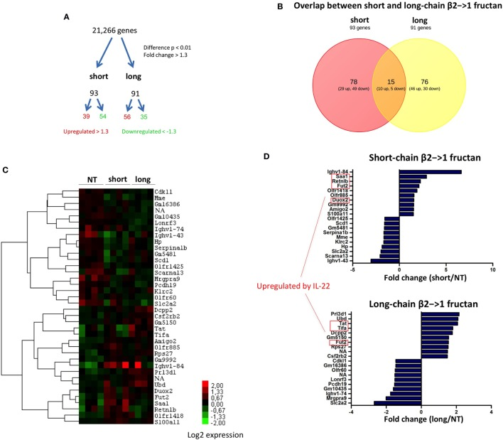 Differential gene expression in the ileum after β2→1-fructan treatment . Whole-genome gene expression in the ileum of C57BL/6 mice ( n = 4 per group) treated with short-chain β2→1-fructans (short), long-chain β2→1-fructans (long), or water was assessed with Affymetrix GeneChip Mouse Gene 1.1 ST arrays. (A) Number of genes that were considerably differentially expressed ( p