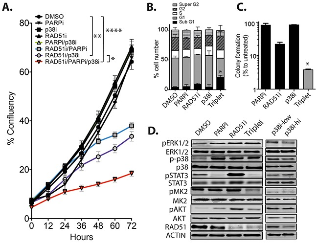 The combination of RAD51/PARP/p38 inhibition retards TNBC growth in vitro A. MDA-MB-231 cells were incubated in the presence of single, dual or triple drug combinations using 10 μM RAD51i, 10 μM p38i and 2.5 μM PARPi and cell growth followed over 72 hours. Results are average percentage confluency of the well (* p