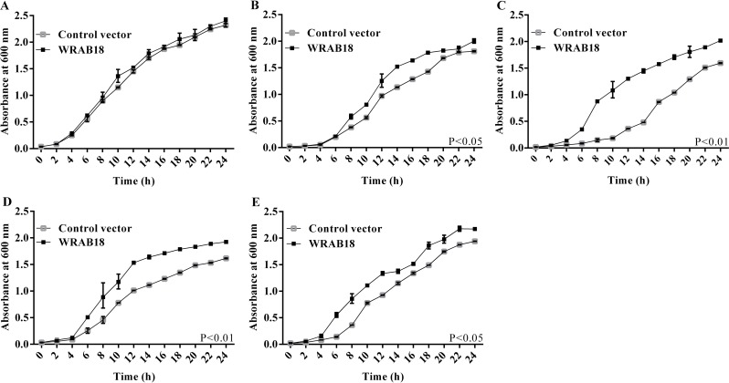 Growth curves of Escherichia coli cultures transformed with WRAB18 or control pET28a under four abiotic stresses. E . coli strains grown under standard culture conditions (A) , in medium supplemented with 800 mM mannitol (B) or 500 mM NaCl (C) , and under exposure to 28° C (D) or 45° C (E) . The OD 600 was measured as an indicator of the increase in density of the liquid cultures. Each stress assay was performed three times, and statistically significant differences were analyzed using the Student's t-test.