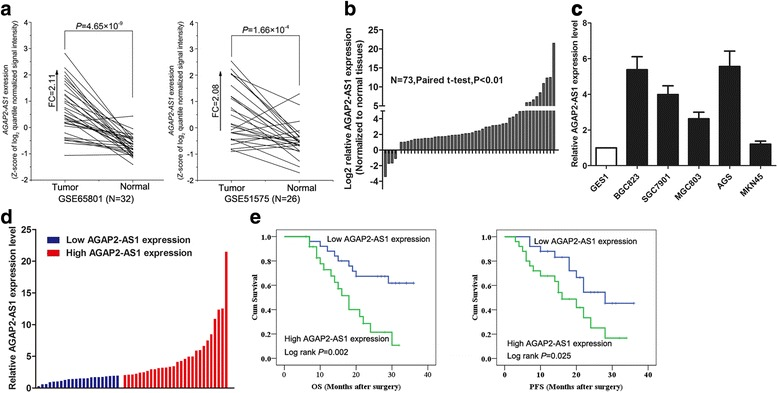 AGAP2-AS1 is overexpressed in the human GC tissues and cells. a Data mining of AGAP2-AS1 expression levels in the GC tissue samples from gene profiling (GSE51575 and GSE65801). b qRT-PCR analysis of AGAP2-AS1 level in the 50 paired GC tissues and adjacent nontumor tissues. AGAP2-AS1 level was normalized to GAPDH expression. c qRT-PCR analysis of AGAP2-AS1 expression in the GC cell lines BGC823, MGC803, SGC7901, AGS, and MKN45 and the normal gastric cell line GSE1. AGAP2-AS1 level was normalized to the GAPDH level. d GC patients were divided into two groups according to AGAP2-AS1 expression profiles. The median fold change was used as the threshold. e Kaplan–Meier overall and disease-free survival analyses were used to investigate the relationship between AGAP2-AS1 expression and GC patient survival. * P