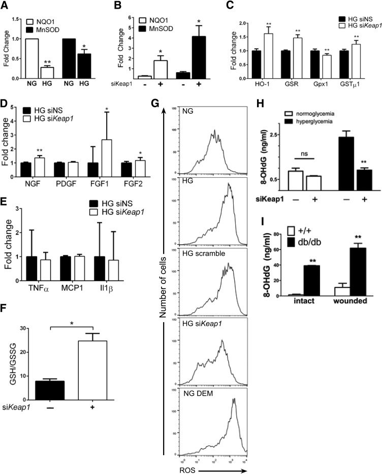 Keap1 inhibition improves ROS handling within fibroblasts by enhancing activation of the endogenous antioxidant program. Gene expression and ROS handling were assessed in vitro following Keap1 silencing. A : Chronic hyperglycemia impairs activation of NQO1 and MnSOD by 72% and 38%, respectively, compared with NG controls. B : siRNA-mediated reduction of Keap1 expression rescues MnSOD and NQO1 expression to 180% and 410% of controls, respectively. C–E : Gene expression analysis of Nrf2 target genes ( C ), growth factors ( D ), and inflammatory markers ( E ) with and without Keap1 silencing. F : Assessment of GSH/GSSG content with si Keap1 . G : CM-H 2 DCFDA–based fluorescent assessment of ROS production reveals that real-time ROS production in HG fibroblasts can be reduced to that of NG cells with si Keap1 . H : Keap1 inhibition within HG fibroblasts reduces the ROS by-product 8-OHdG by 62% compared with control. 8-OHdG in NG cells is nonsignificantly decreased by 25%. I : db/db Mice have 5.6-fold greater accumulation of ROS in wounded skin compared with WT controls; intact db/db skin accumulates 3.5-fold more ROS than wounded WT skin. * P