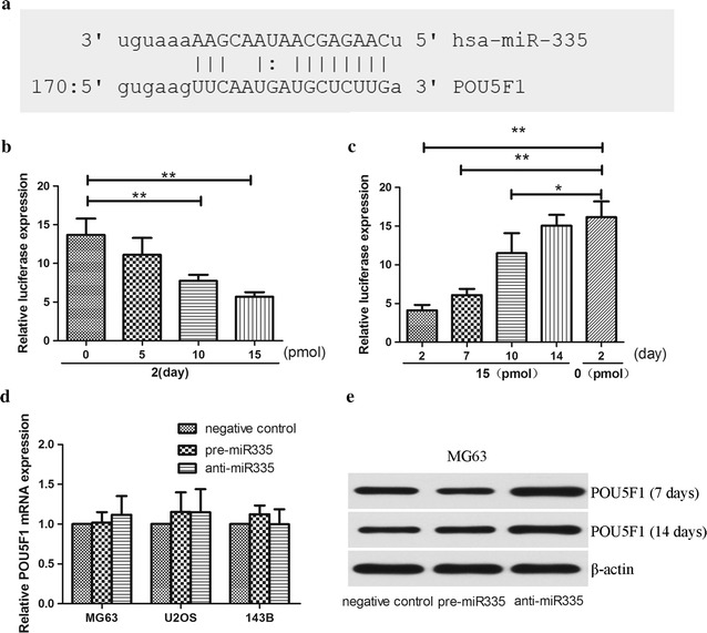 miR-335 negatively regulated POU5F1 gene expression. a Bioinformatics study indicated that miR-335 was partially complementary to the 3′-UTR of POU5F1 mRNA. b Different doses of pre-miR-335 were co-transfected with the specific pMIR-REPORT construct into HEK293 cells. Luciferase activities were measured and normalized to the phRL-TK activities. c The effect of pre-miR-335 gradually diminished in 2 weeks. d Osteosarcomas cells were transfected with pre-miR-335, anti-miR-335 or their control respectively. After induction for 7 and 14 days, the cells were harvested for measurement of POU5F1 mRNA using qRT-PCR and e the protein expression using Western blot. Untreated cells was set as control, and β-actin acts as an internal control. All experiments were carried out at least triplicates and the data were presented as the mean ± SD. Student t test was performed to evaluate the difference. *P