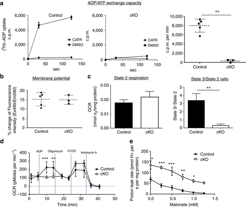 Characterization of Ant2 -deleted liver mitochondria. ( a ) ADP/ATP exchange capacity measured by [ 3 H]ADP uptake in the presence or absence of the ANT specific inhibitor, carboxyatractyloside (CATR). Left two panels show representative data from control and Ant2 cKO liver mitochondria, while the far right graph shows the average of multiple experiments ( n =5; ** P