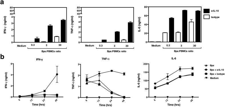 Neutralization of IL-10 increases IFN-γ, TNF-α and IL-6 production in response to B. pseudomallei. PBMCs of one representative donor were stimulated with killed B. pseudomallei at various ratios (0.3:1, 3:1 or 30:1) with or without the addition of anti-IL-10 mAb for 48 hours in vitro ( a ). Kinetics of PMBCs cytokine responses to killed B. pseudomallei (30:1 ratio) in the presence or absence of anti-IL-10 mAb for 6, 12, 24 or 48 hours in vitro ( b ). IFN-γ, TNF-α and IL-6 in cell supernatants were measured by ELISA. The data are presented with the mean and the standard deviation.