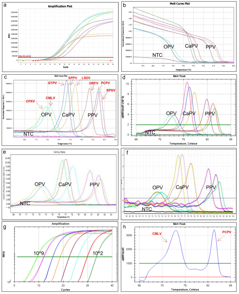 Melting curve analysis of the targeted eight poxviruses using different PCR platforms. Each genotype displayed a unique melting peak. ( a ). amplification plot; ( b ). melt curve plot; ( c ). melting peaks using the QuantStudio 6, Life Technologies); ( d ). melting peaks using the CFX96, Bio-Rad; ( e ). melting peaks using LC480II, Roche; ( f ). melting peaks using the Rotor Gene Q, Qiagen); ( g ). Linearity test (10 9 to 10 2 virus copies); and ( h ). Co-infection with CMLV and camel PCPV (blue colour two melting peaks, 72.80 °C and 81.20 °C for CMLV and camel PCPV respectively).