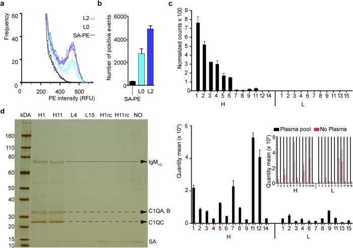 """Enriched ssODNs interact with the surface of exosomes. ( a ) The enriched 5′-biotinylated ssODN library L2 (blue curves) reveals enhanced binding, measured by flow-cytometry, to UC isolated exosomes, compared to the 5′-biotinylated starting library L0 (cyan curves), or absence of ssODNs (w/o; black curves) using SA-PE as a staining agent, and gated only on double-positive CFSE+DiD+ events ( Supplementary Fig. 2 ). The curves show the distribution of relative fluorescence intensities for observed events. Each curve represents an independent binding experiment (n = 3). ( b ) Total number of positive SA-PE staining events from ( a ) (number of events > RFU 400) of biotinylated L0 (cyan), and biotinylated L2 (blue), compared to absence of ssODNs (w/o; black), in exosome binding. In each binding reaction 12 nM of each library was used. ( c ) Post-ADAPT quantification of binding of individual aptamers as part of the library and individually as illustrated in Supplementary Fig. S3 . The top panel shows 23 representative individual aptamers, selected either with high """"H"""" or low """"L"""" normalized counts from L3 NGS data after binding pooled plasma from breast biopsy negative donors. There is at least a 5-fold difference between counts of H and L ssODNs. These 23 sequences were re-synthesized and tested individually in the same binding assay, but in equal concentrations, unlike their original representation in L3. PEG-precipitated aptamer/plasma complexes were directly subjected to qPCR (bottom panel). Inlay: Magnification of qPCR results of ssODNs incubated with PBS instead of plasma (red). ( d ) Silver-stained reducing SDS-PA gel of pulled down proteins from PPT plasma with the indicated ssODNs (H1, H11, L4, L15), immobilized on streptavidin magnetic beads, and the control without ssODN (NO). Dashed arrows indicate pulled down proteins C1QA, C1QB, and C1QC. The dotted arrow indicates the heavy chain of IgM (IgM HC ). SA: streptavidin. RC: reverse complement sequence."""