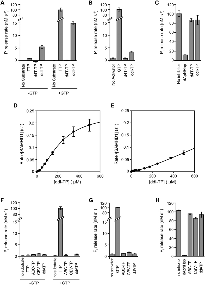 The effects of <t>d4T-TP,ddI-TP,ddA-TP,</t> ABC-TP and CBV-TP on SAMHD1 triphosphohydrolase activity. ( A ) Hydrolysis of 0.3 mM TTP, d4T-TP or ddI-TP in the absence (left) and presence (right) of 0.1 mM activator GTP. ( B ) Activation of SAMHD1 TTP hydrolysis. Triphosphohydrolase activity was measured with 0.3 mM TTP substrate upon addition of 0.1 mM GTP, d4T-TP or ddI-TP as activators. ( C ) Inhibition of SAMHD1 GTP-activated TTP hydrolysis. Triphosphohydrolase activity was measured with 0.3 mM TTP and 0.1 mM GTP activator alone and with addition of 0.3 mM dApNHpp positive control, d4T-TP or ddI-TP. Error bars are the standard error of the mean (SEM) of three independent measurements. ( D ) Concentration dependence of SAMHD1 ddI-TP hydrolysis in the presence of 0.2 mM GTP (saturating activator concentration). Nonlinear least squares fitting using a Hill equation gives the apparent binding constant K S = 226 ± 12 μM, catalytic constant k cat = 0.24 ± 0.04 s −1 and the Hill coefficient n = 1.7 ± 0.1 (Mean ± SEM). ( E ) ddI-TP allosteric activation of TTP hydrolysis. Rates were determined for 1 mM TTP at varying dd-ITP concentration. Nonlinear least squares fitting gives only lower estimates for the maximal rate and the ddI-TP concentration at half maximal activation of k max > 0.1 s −1 and K a > 300 μM. ( F ) Hydrolysis of 0.3 mM TTP, ABC-TP, CBV-TP and ddATP in the absence (left) and presence (right) of 0.1 mM activator GTP. ( G ) Activation of SAMHD1 TTP hydrolysis. Triphosphohydrolase activity was measured with 0.3 mM TTP substrate upon addition of 0.1 mM GTP, ABC-TP, CBV-TP or ddATP as activators. ( H ) Inhibition of SAMHD1 GTP-activated TTP hydrolysis. Triphosphohydrolase activity was measured with 0.3 mM TTP and 0.1 mM GTP activator alone and with addition of 0.3 mM dApNHpp positive control, ABC-TP, CBV-TP or ddATP. Error bars are the range of data from two independent measurements.