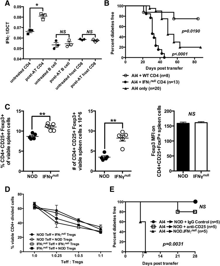 IFN-γ–producing CD4 +  T cells suppress diabetogenic CD8 +  T cells through mechanisms that do not involve quantitative or functional variations in Tregs.  A : Quantitative PCR analysis of IFN-γ mRNA expression by host-type CD4 +  and CD8 +  (Vα8 − ) T cells and B cells purified from spleens of NOD mice 3 days postadoptive transfer with 2 × 10 7  NOD. Rag1 null .AI4  splenocytes (post-AT) or untreated NOD mice (untreated). Results represent the mean ± SE of three samples per treatment.  B : Diabetes incidence for female NOD. scid  mice injected at 6–8 weeks of age with 1 × 10 7  NOD. Rag1 null .AI4  splenocytes in the presence or absence of 3 × 10 6  CD4 +  T cells purified from NOD or NOD. IFN-γ null  donors.  C : Frequencies, numbers, and mean fluorescence intensity (MFI) of FoxP3 antibody staining of splenic CD4 + CD25 + FoxP3 +  Tregs in NOD and NOD. IFN-γ null  mice. Results represent the mean ± SE of five mice per treatment.  D : Crisscross cultures were established to assess the ability of CD4 + CD25 +  Tregs from NOD and NOD. IFN-γ null  mice to suppress the anti-CD3–stimulated proliferation of CD4 + CD25 −  effectors from both strains (assessed by flow cytometic detection of CFSE dilution).  E : Beginning at 6 weeks of age, NOD female mice received three biweekly i.p. injections with the Treg-depleting CD25-specific PC61 antibody or a rat IgG1 isotype control. One week after the first treatment, mice in both groups were injected i.v. with 1 × 10 7  NOD. Rag1 null .AI4  splenocytes and subsequently monitored for diabetes. Survival curves compared by log-rank test. * P