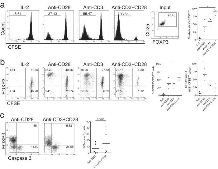Single-CD28 stimulation induces Treg proliferation and promotes high level FOXP3 expression. Flow cytometry of FACS-sorted human Treg (CD4+CD25 high ) that were labeled with CFSE and stimulated with soluble CD28 mAb, plate bound CD3 mAb or both (Anti-CD3+CD28 ) in the presence of rhIL-2. As a control Treg cultured in the presence of rhIL-2 only were included. Cell division indicated by the dilution of CFSE ( a ), intracellular expression of FOXP3 ( b ) and active caspase 3 ( c ) were determined at day 7 of the cultures. Numbers within the histograms indicate the percentage of divided cells ( a ) and numbers within the quadrant show the percentage of positive cells ( b,c ). Cumulative data of Treg proliferation ( a , right panel), the median fluorescence intensity (MFI) of FOXP3 ( b , right panel), and the percentage of apoptotic cells ( c ) right panel) are also shown. Bar in cumulative data indicates the mean value. Kruskal-Wallis followed by Dunns post-hoc test ( a ) n = 3; b, n = 3) and Wilcoxon signed-rank test ( c , n = 5) were used for statistical analysis. *P