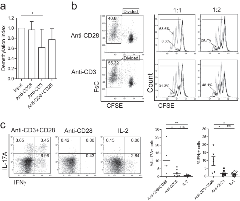 <t>Single-CD28</t> stimulated Treg reveal a highly demethylated FOXP3 gene and profound suppressor function. ( a ) FACS-sorted human Treg were stimulated with soluble CD28 mAb, plate bound <t>CD3</t> mAb or both (anti-CD3+CD28) in the presence of rhIL-2 for 7-days. Thereafter, cells were harvested and the demethylation status of FOXP3 gene was analyzed using bisulfate sequencing. n = 6–7. ( b ) CFSE-labeled FACS-sorted Treg were stimulated as described above. The divided cells (CFSE low population) were re-sorted (left panel) at day 7 of the cultures, and subsequently their suppressive function was analyzed in a co-culture suppression assay. Overlay histograms show the inhibition of responder T cells (Tresp) proliferation following the addition of graded doses of Treg. Numbers indicate the percentage of divided responder T cells. Grey line: stimulated Tresp, Black line: co-cultured with Treg of interest. The ratio of Treg:Tresp are indicated on the top. Representative experiment of n = 3 individual experiments conducted with cells obtained from different donors are shown. ( c ) Intracellular staining of cytokine IL-17A and IFNγ after additional stimulation with PMA, ionomycin, and Brefeldin-A for 4 hours. Numbers within the quadrant indicate the percentage of positive cells. Dotplots show a representative experiment of n = 6–10 individuals as shown in the cumulative data graph (right panel). Kruskal-Wallis followed by Dunns post-hoc test was used for statistical analysis ( a,c ). *P