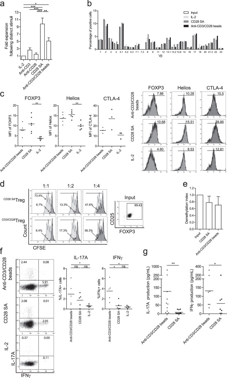 CD28-superagonist drives polyclonal Treg proliferation and enhances expression of FOXP3, Helios and CTLA-4. Flow cytometry of FACS-sorted human Treg that were stimulated with soluble CD28-superagonist(CD28 SA) or anti-CD3/CD28 mAb coated microbeads (anti-CD3/CD28 beads) in the presence of rhIL-2. As a control Treg cultured in the presence of rhIL-2 only were included. ( a ) Fold expansion of Treg during 7 days of culture. n = 6–9. ( b ) TcR Vβ repertoire analysis following the indicated stimuli (see legend). One experiment of two similar ones conducted with cells obtained from different donors is shown. ( c ) Intracellular expression of FOXP3, Helios and CTLA-4 by Treg after 7 days stimulation (X-axis). Numbers within the histogram show the median fluorescence intensity (MFI). n = 6. ( d ) CFSE-based co-culture suppression assays showing a representative experiment of two independent ones. The ratio of Treg:Tresp are indicated at the top. Numbers indicate the percentage of divided responder T cells. Grey line: stimulated Tresp; Black line: co-cultured with CD28-superagonist or anti-CD3/CD28 beads expanded Treg. ( e ) Demethylation status of FOXP3 gene was analyzed using bisulfate sequencing. n = 3. ( f ) Intracellular staining of IL-17A and IFNγ at day 7 of the cultures. Numbers within the quadrant indicate the percentage of positive cells. Dot plots show a representative experiment of five individual ones conducted with cells obtained from different donors as shown in the cumulative data graphs; n = 5. ( g ) Measurement of IL-17A and IFNγ production in culture supernatants using luminex at day 7 of the cultures. n = 11 (for IL-17A) and n = 7 (for IFNγ). Bar in cumulative data indicated the mean value. Kruskal-Wallis followed by Dunns post-hoc test was used for statistical analysis ( a,c,e–g ). *P