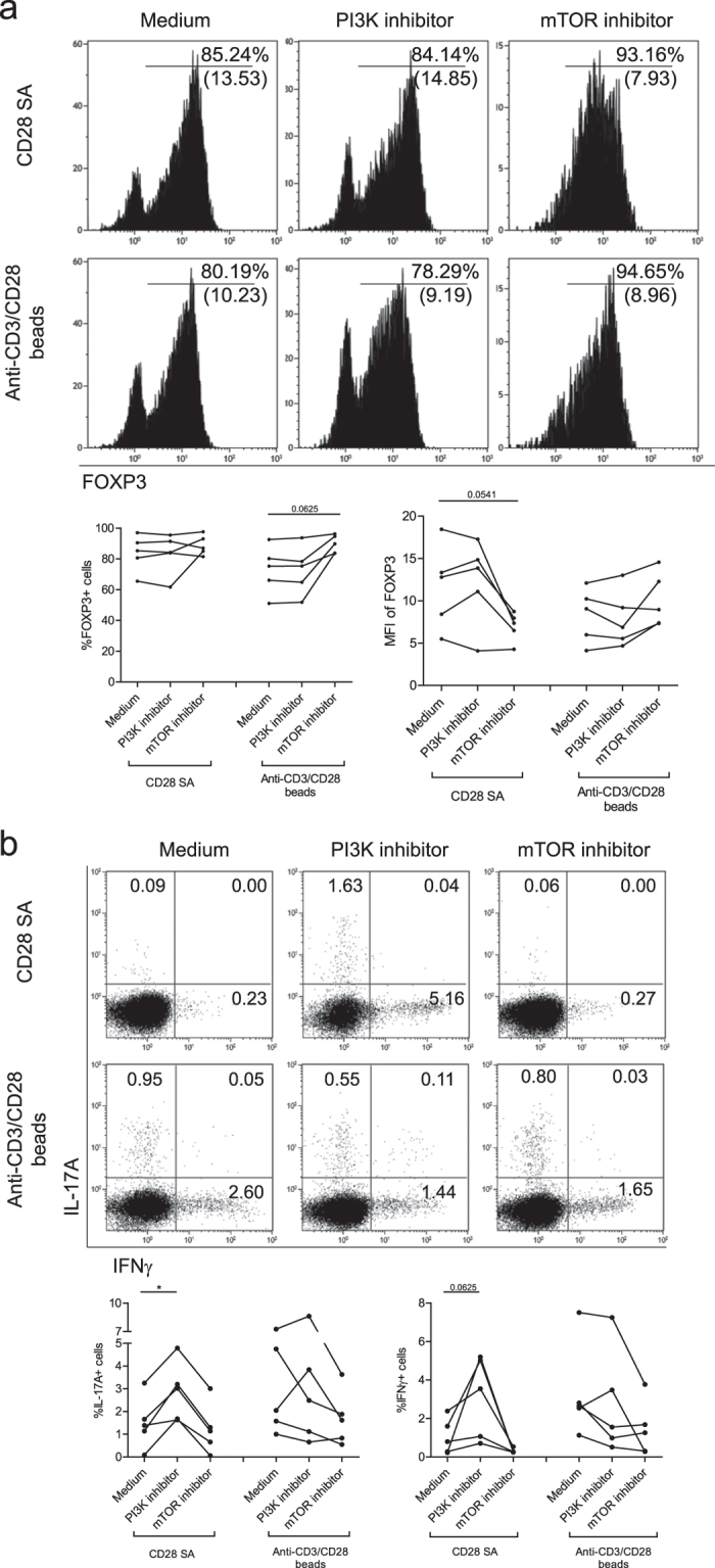 PI3K and mTOR differentially regulate CD28-superagonist mediated Treg stability. Flow cytometry of FACS-sorted human CD4+CD25 high Treg that were stimulated with CD28-superagonist(CD28 SA) or anti-CD3/CD28 mAb coated-microbeads and exogenously added rhIL-2. The cells were pretreated for 30 minutes with the PI3K inhibitor wortmannin, or mTOR inhibitor rapamycin as indicated on the top. ( a ) Intracellular FOXP3 expression and ( b ) intracellular IL-17A and IFNγ staining at day 7 of the cultures. Numbers within the histogram indicate the MFI of FOXP3 and the percentage of positive cells, respectively ( a ), and numbers within the quadrants indicate the percentage of cytokine producing cells. A representative example of n = 5 ( a,b ) individual experiments conducted with cells obtained from different donors is shown. Aggregate data are shown in the figures bellow the flow cytometry plots. Wilcoxon signed-rank test was used for the comparison between medium group and inhibitor-treated group. *P