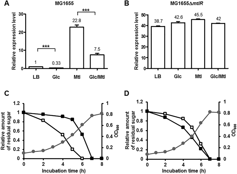 Inactivation of mtlR completely abolishes the glucose-dependent repression of the mtl operon and glucose preference over mannitol. ( A , B ) Total RNA was isolated from wild type ( A ) and an mtlR deletion mutant ( B ) of E. coli MG1655 grown to early exponential phase in LB medium or LB medium containing the indicated sugars (0.2% each when added alone, or 0.1% each when added in combination), and the expression level of the mtl operon was then quantified by qRT-PCR as described in the Materials and Methods section. Representative data (mean ± SD) from three independent experiments (n = 3 each) are shown. Statistical significance was determined by Student's t -test (***P
